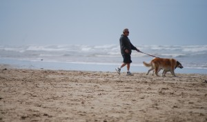 Walk your four legged friend for your good health